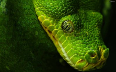 Beautiful Animal high resolution wallpapers | A Long And Perilous Voyage