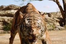 The Jungle Book 640x427