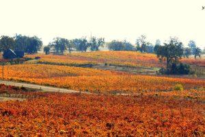 amador-county-winery