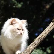 Appeler un chat un chat