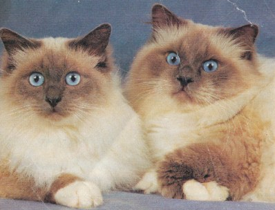 anciens-chats