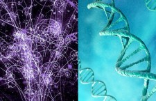 Spiral Motion of Neutrinos and Helical (Spiral) Form of DNA