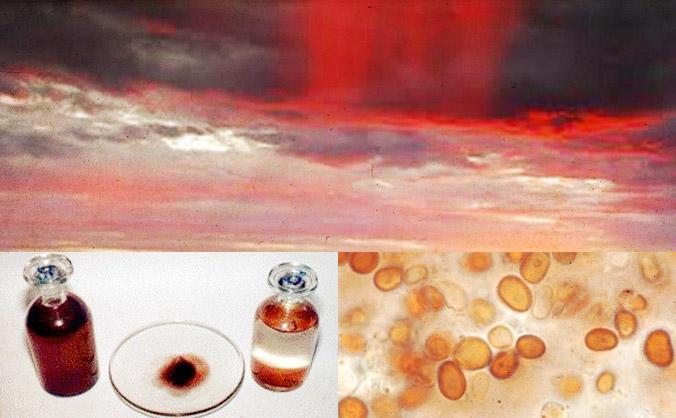 Red_Rain_Microorganisms