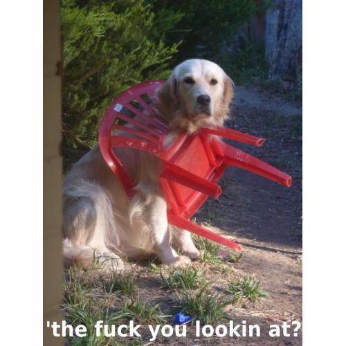 Medium Crop Of Angry Dog Meme