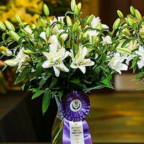 Best in Class: Cut Bulb 'Snowboard' Oriental Lily Oregon Flowers, Inc.
