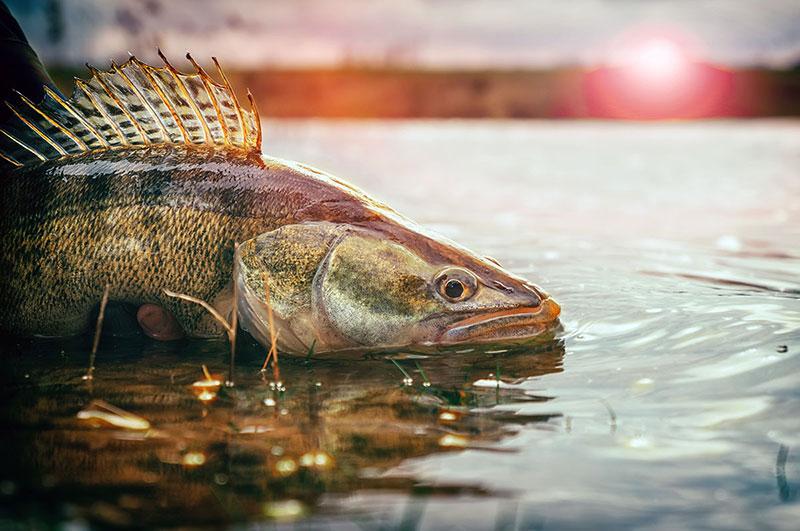 Saginaw Bay Weekly Fishing Report \u2013 Saginaw Bay Area