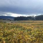 Cambados albariño vineyards