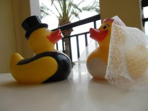 Our ducks even came on honeymoon with us! Xx