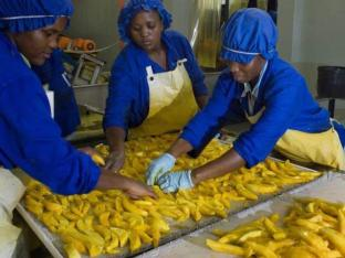 Export fruit processing