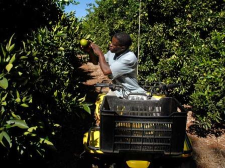 Large exporter of fruit globally