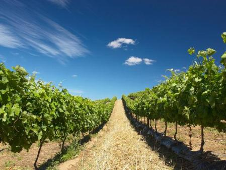 Ideal conditions for wine