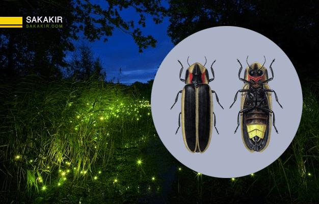 معلومات علمية عن الحشرات