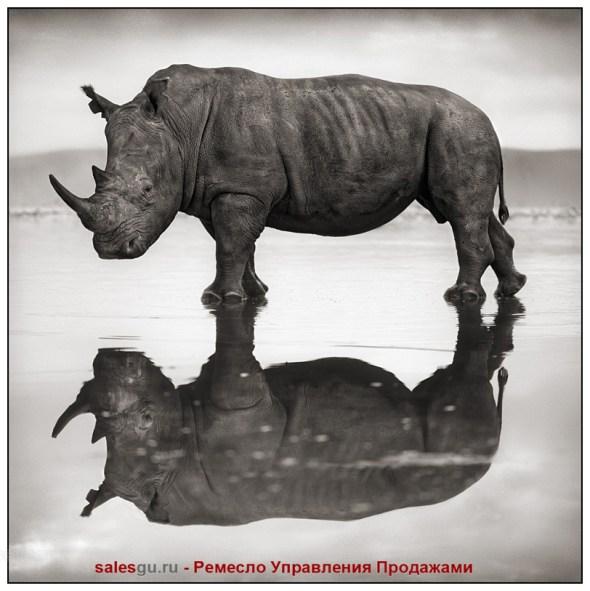 Носорог на озере. Автор фото: Ник Брандт Андре (Nick Brandt)