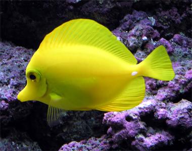 Types of Pet Fish   Salman's Pets