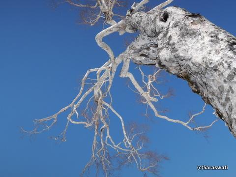 青空に映える木