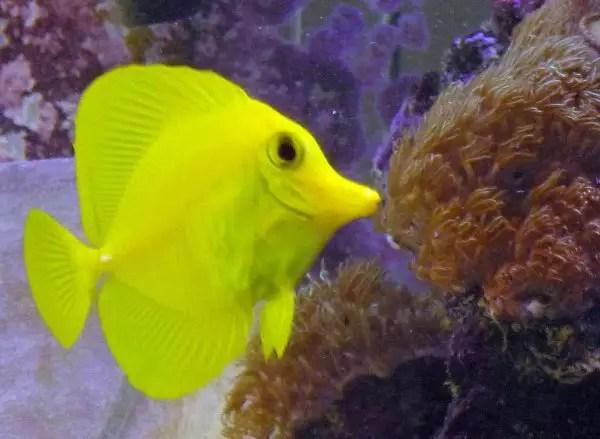 Saltwater Aquarium Fish For Sale | Aquatic Gardens