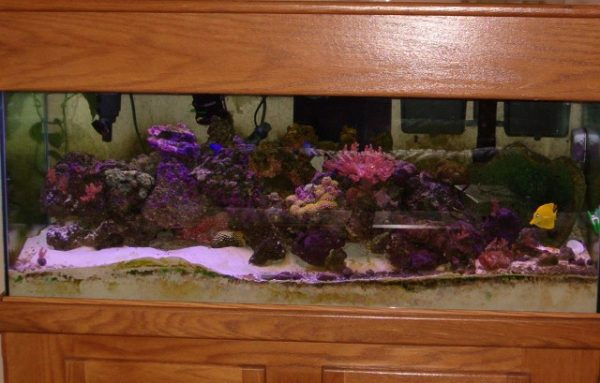 Finding fish tanks online a post for beginners saltwater for Fish supplies online