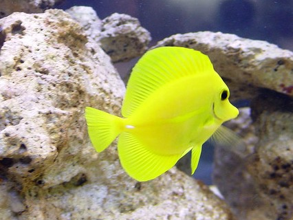 dealing with aggression between fish in a marine aquarium