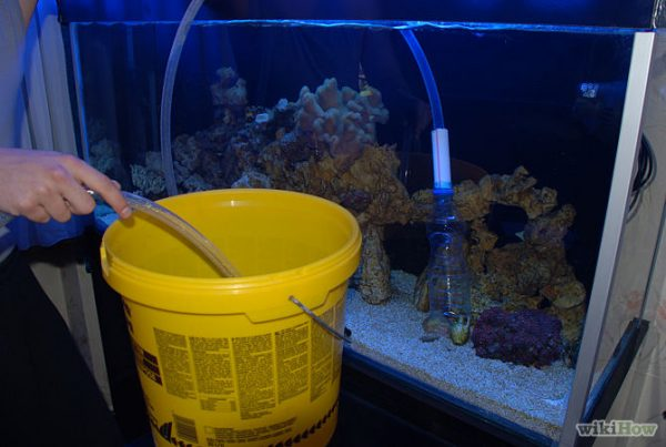 A simple reef aquarium maintenance schedule for Easy aquarium fish