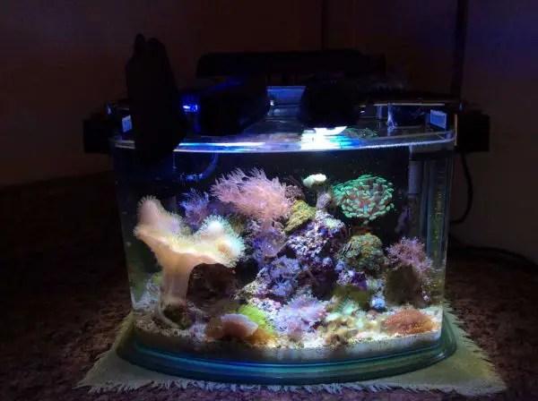 the new saltwater aquarium guide