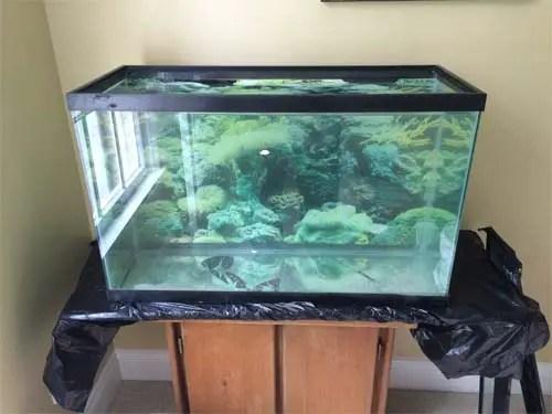 quarantine tank setup