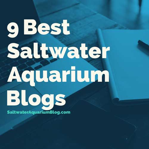 9 best saltwater aquarium blogs