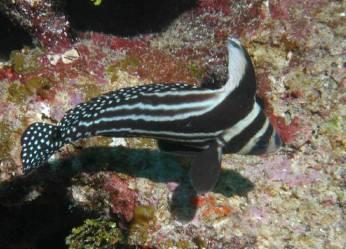 Scuba diving, Cozumel Mexico