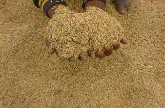 Saisie de riz impropre à la consommation par la Gendarmerie territoriale de Thiaroye