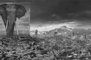 Nick Brandt : «Inherit the Dust», African Wildlife Roaming, Leur habitat perdu