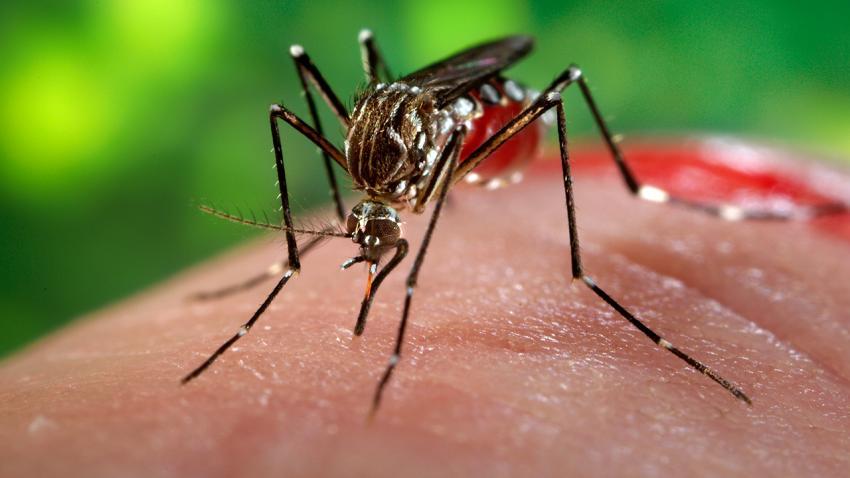 Zika,virus