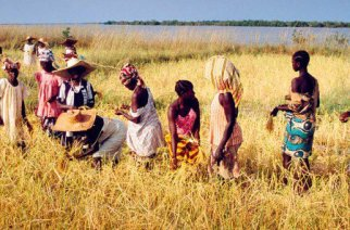 """18 juin 2016 à 15h28 — Mis à jour le 18 juin 2016 à 16h37 Par AFP 912 partages  Le gouvernement sénégalais va prendre des """"mesures fortes"""" contre la coupe abusive de bois en Casamance, dans le sud du pays, a affirmé le ministre des Forces armées, après l'avertissement d'une ONG sur la disparition des forêts dans cette région d'ici deux ans. À lire aussi Sénégal : Haïdar El Ali sonne l'alerte sur le pillage des forêts de la Casamance      Sénégal : Haïdar El Ali sonne l'alerte sur le pillage des forêts de la Casamance     Gabon : la forêt tropicale, un poumon sous pression  « La décision est prise de faire arrêter la coupe abusive de bois dans nos forêts. Il faut que les gens qui s'adonnent à cette pratique le comprennent. Je crois fortement que cette pratique va cesser d'ici quelques jours », a déclaré vendredi soir à la presse le ministre Augustin Tine, sans annoncer de mesures précises.  Il s'exprimait dans la ville de Kolda, en Casamance, en présence des ministres de l'Intérieur et de l'Environnement, Abdoulaye Daouda Diallo et Abdoulaye Baldé, à l'issue d'une visite dans cette zone frontalière de la Gambie, la plus boisée du Sénégal.  « C'est effarant ce que nous avons vu. Des gens inconscients détruisent notre environnement, l'économie de notre pays et l'avenir de nos enfants. C'est inadmissible. L'État va agir avec des mesures fortes pour mettre fin à (cette) situation », a ajouté M. Tine.  À lire aussi : Environnement : les forêts africaines toujours plus menacées  Ces mesures sont annoncées après l'avertissement lancé le 26 mai par le militant écologiste et ancien ministre sénégalais de l'Environnement Haidar El Ali, mettant en cause le trafic de bois vers la Chine à partir de la Gambie voisine.  Le pillage de la forêt en Casamance « a atteint un seuil de non-retour et d'ici deux ans, ce sera trop tard. Nous tirons la sonnette d'alarme », avait déclaré M. El Ali, qui dirige l'Océanium, à la fois centre de plongée et association de protection de l'environneme"""