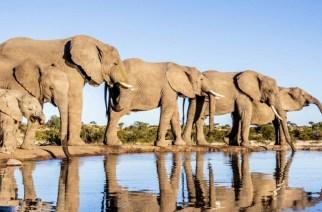 Trois pays africains demandent le retour du commerce de l'ivoire