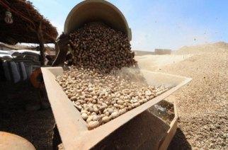 Peur sur l'arachide sénégalaise