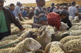 houribga au centre du Maroc, le 7 septembre 2016. © Abdeljalil Bounhar/AP/SIPA