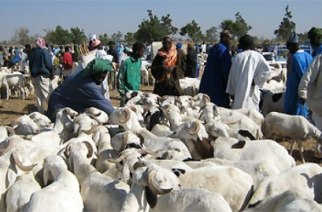 Aïd El-kébir : comment le Sénégal a fêté le mouton