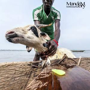 11 Boubacar Touré mandémory, photo
