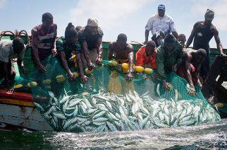 Pêche illicite : les pertes de 150 milliards FCFA confirmées