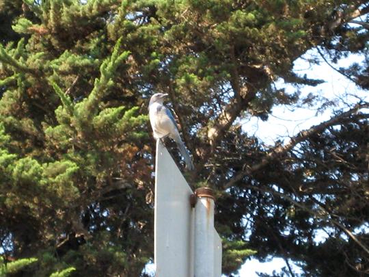 Monterey Bay bird