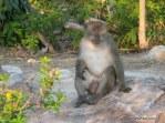 Koh Phi Phi Monkey 2