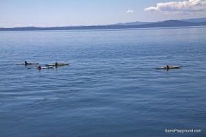 Whale Watching in San Juan Islands