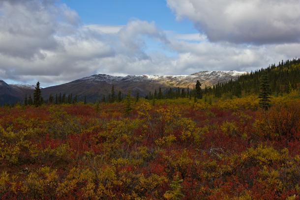 Denali National Park so colourful