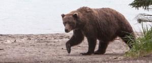 Don't Get Eaten! Bear Safety Tips