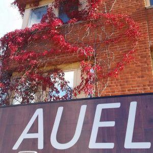 Bröderna Auel driver café i Tensta Konsthall. Under Almedalsveckan kan du köpa Afro Tacos på Samtalsgården!