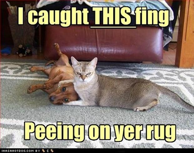 Pics Photos - Funny Cats And Dogs Peeing On The Carpet