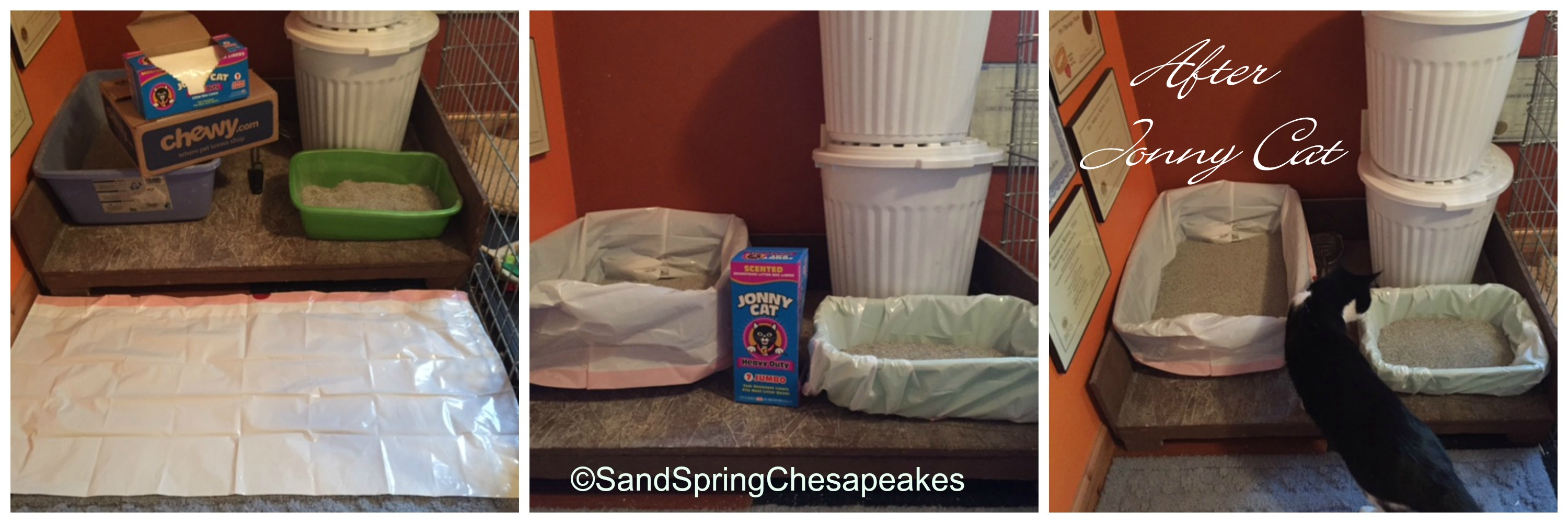 Chewy Review Sand Spring Chesapeakes