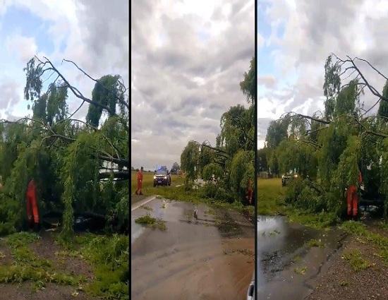 En medio del temporal un árbol cayó y bloqueó la Ruta 34