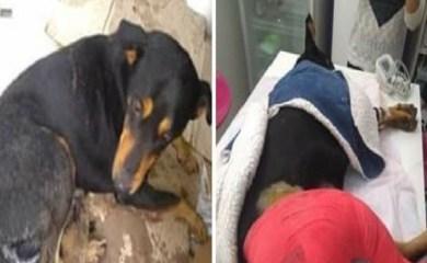 San Genaro: Tras una larga lucha, falleció un perro atropellado