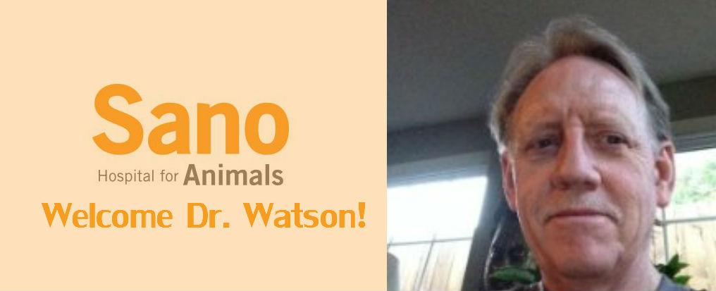 Dr Watson, I presume ~ Sano Hospital for Animals