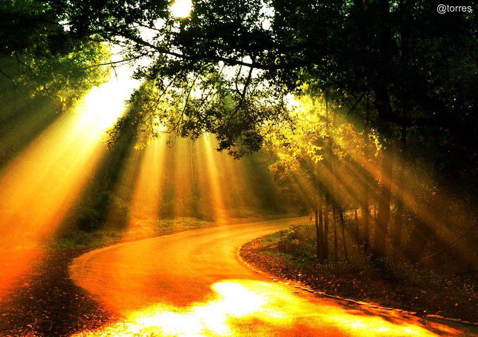 Fall Sunshine Wallpaper Path Trees Sunrays Santatizing S Blog