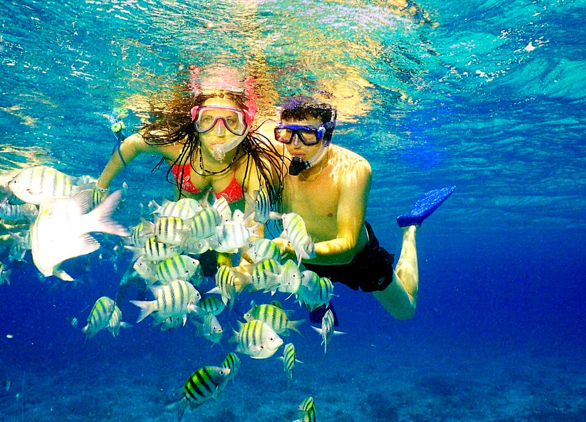 De Snorkels Catalina Island Snorkeling Excursion From Bayahibe Saona
